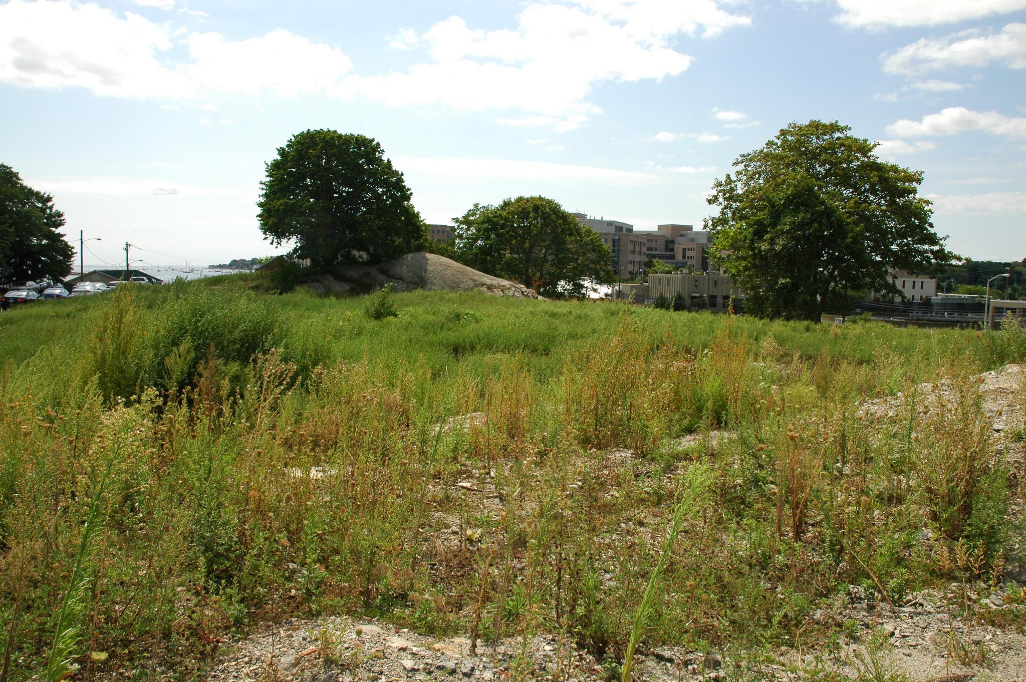 Este seria parte do jardim de Susette Kelo, em estado de abandono após ter sido desapropriado pelo município. Foto: drs @ Flickr