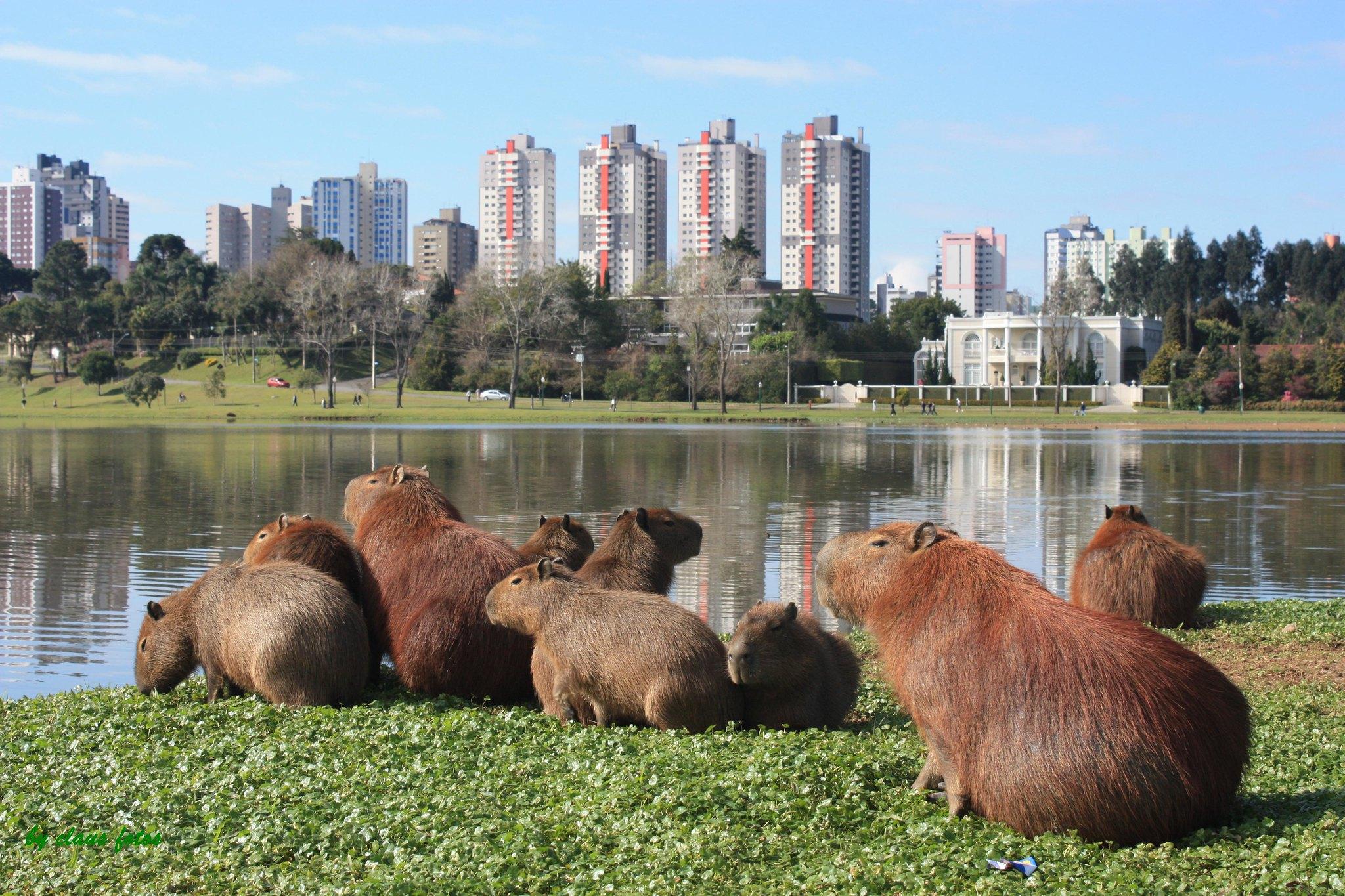 A importância das cidades para a preservação ambiental
